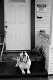 Προειδοποίηση φλοιών σκυλιών Στοκ Εικόνες