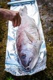 Προετοιμάζοντας τα μεγάλα ψάρια συναγρίδων για το μαγείρεμα σχαρών στο πικ-νίκ έξω Στοκ Εικόνα