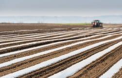 Προετοιμασία για το αγγούρι που φυτεύει στον τομέα - που βάζει το νάυλον φύλλο αλουμινίου Στοκ Εικόνες