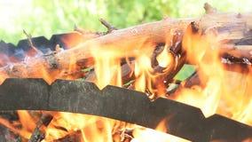 Προετοιμασία μιας σχάρας για το μαγείρεμα του κρέατος στα οβελίδια, σχάρα shish kebab Shish kebab στη φύση, βιντεοσκοπημένες εικό απόθεμα βίντεο