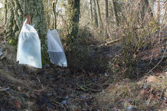 Προετοιμασία του σφρίγους σημύδων Στοκ φωτογραφίες με δικαίωμα ελεύθερης χρήσης