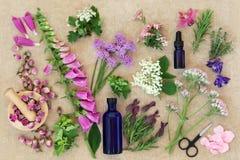Προετοιμασία των ιατρικών λουλουδιών και των χορταριών Στοκ Εικόνες