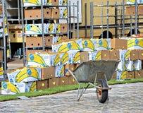 Προετοιμασμένος για τη δημιουργία ταπήτων λουλουδιών ένα εκατομμύριο από begonias στοκ εικόνες