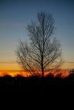 προηγούμενο ομιχλώδες δέντρο σκιαγραφιών πρωινού στοκ φωτογραφία