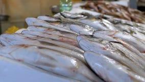Προθήκη με τα φρέσκα ψάρια θάλασσας στον πάγο στην αγορά οδών φιλμ μικρού μήκους