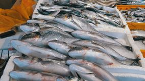 Προθήκη με τα φρέσκα ψάρια θάλασσας στον πάγο στην αγορά οδών απόθεμα βίντεο