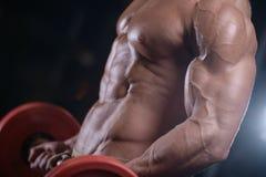 Προκλητικά ισχυρά αθλητικά άτομα bodybuilder που αντλούν επάνω τους μυς με το dum Στοκ Φωτογραφίες