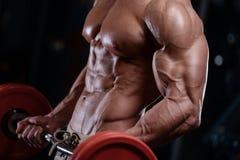 Προκλητικά ισχυρά αθλητικά άτομα bodybuilder που αντλούν επάνω τους μυς με το dum Στοκ Εικόνες