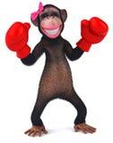 Προκλητικός πίθηκος Στοκ εικόνες με δικαίωμα ελεύθερης χρήσης