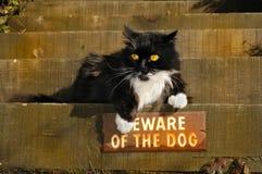 προκλητικό γατάκι Στοκ εικόνες με δικαίωμα ελεύθερης χρήσης
