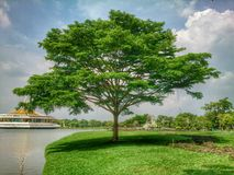 προκυμαία δέντρων Στοκ φωτογραφίες με δικαίωμα ελεύθερης χρήσης