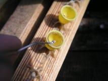 Προνύμφη mellifera Apis μελισσών μελιού που λαμβάνεται από την κηρήθρα που χρησιμοποιείται για την τεχνητή αναπαραγωγή Στοκ φωτογραφία με δικαίωμα ελεύθερης χρήσης