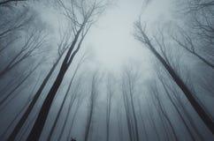 Προοπτική δέντρων Στοκ Εικόνες