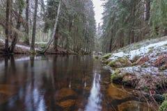 Προοπτική βατράχων πέρα από ένα μικρό κανάλι σε ένα σουηδικό δάσος στοκ φωτογραφία