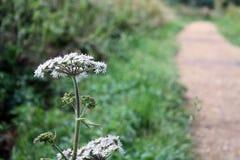 Προοπτική λουλουδιών Στοκ Φωτογραφίες