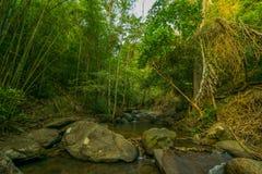 Προορισμοί Ρίο Celeste ταξιδιού υποβάθρου φύσης του Ρίο CelesteCosta Rica προορισμών ταξιδιού υποβάθρου φύσης της Κόστα Ρίκα Στοκ Εικόνα