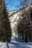 Προς τα κάτω κάνοντας σκι μεταξύ των δέντρων Στοκ Εικόνες