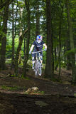 Προς τα κάτω ποδηλάτης βουνών σε ένα δάσος κοντά σε Kronberg, Γερμανία Στοκ Εικόνες