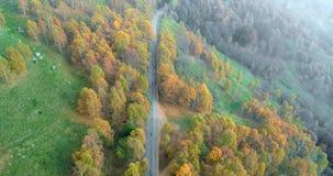 Προς τα πίσω ανακαλύψτε την εναέρια τοπ άποψη πέρα από το δρόμο στο ζωηρόχρωμο πορτοκαλί, πράσινο, κίτρινο κόκκινο δέντρο φθινοπώ απόθεμα βίντεο
