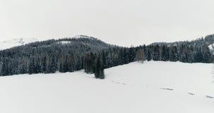 Προς τα πίσω κεραία πέρα από τη χιονώδη πεδιάδα με το forestCloudy κακό συννεφιάζω καιρό ξύλων Ιταλικά βουνά Άλπεων χειμερινών δο απόθεμα βίντεο