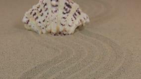 Προσέγγιση ενός όμορφου άσπρου θαλασσινού κοχυλιού που στέκεται σε ένα τρέκλισμα φιαγμένο από άμμο φιλμ μικρού μήκους