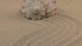 Προσέγγιση ενός όμορφου θαλασσινού κοχυλιού που βρίσκεται σε μια κυματιστή άμμο απόθεμα βίντεο