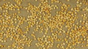 Προσέγγιση των ξηρών σιταριών μπιζελιών που διασκορπίζεται burlap φιλμ μικρού μήκους