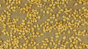 Προσέγγιση των σιταριών καλαμποκιού που διασκορπίζεται burlap απόθεμα βίντεο