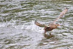 Προσγείωση νερού Στοκ Φωτογραφία