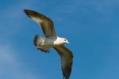 προσγειωμένος seagulls ακτή Στοκ Φωτογραφία