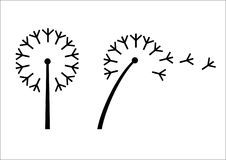 Προσδιορισμός λουλουδιών πικραλίδων Στοκ φωτογραφία με δικαίωμα ελεύθερης χρήσης