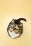 προσεκτική γάτα Στοκ φωτογραφία με δικαίωμα ελεύθερης χρήσης