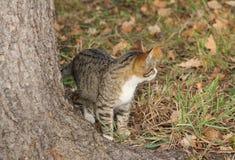 Προσεκτικό γατάκι στοκ φωτογραφία