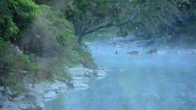 προσεκτικό whitetail αγάπης ελαφιών fawn mom απόθεμα βίντεο
