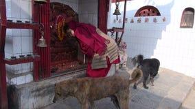 Προσευχή και σκυλιά γυναικών στην οδό Katmandu Παραδοσιακός ινδός βωμός - Κατμαντού, Νεπάλ απόθεμα βίντεο