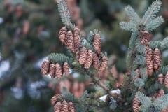 Προσκρούσεις σε ένα πράσινο χριστουγεννιάτικο δέντρο Στοκ εικόνα με δικαίωμα ελεύθερης χρήσης