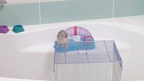 Προσοχές οι νέες γυναικών για ένα κατοικίδιο ζώο, πλένουν έναν λαβύρινθο κάτω από μια βρύση με το νερό και καθαρίζουν ένα κλουβί  φιλμ μικρού μήκους