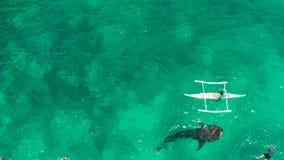 Προσοχή καρχαριών φαλαινών Oslob νησί των Φιλιππινών, Κεμπού απόθεμα βίντεο