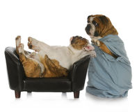 προσοχή κτηνιατρική Στοκ Εικόνες