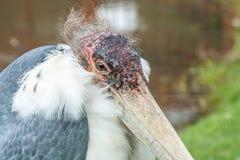 Προσοχή πουλιών Στοκ εικόνες με δικαίωμα ελεύθερης χρήσης