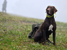 Προσοχή σκυλιών κυνηγιού Στοκ Εικόνα