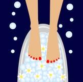 Προσοχή των ποδιών, birdbaths με τα λουλούδια του camomi απεικόνιση αποθεμάτων