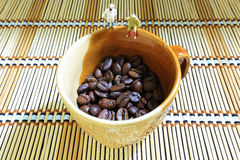 Προσοχή φασολιών καφέ Στοκ Φωτογραφίες