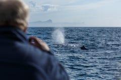 Προσοχή φαλαινών, φάλαινα σπέρματος με την πηγή Στοκ φωτογραφία με δικαίωμα ελεύθερης χρήσης