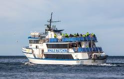 Προσοχή φαλαινών Στοκ εικόνες με δικαίωμα ελεύθερης χρήσης