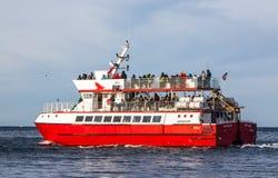 Προσοχή φαλαινών Στοκ Φωτογραφία