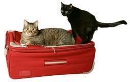 προστασία αποσκευών κάτ&omega Στοκ Φωτογραφία