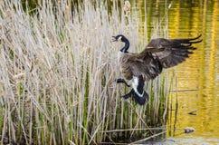 Προστασία της φωλιάς πουλιών Στοκ Εικόνες