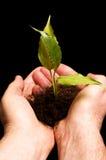 προστασία φυτών ατόμων χερ&iot Στοκ Εικόνες