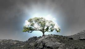 Προστασία φύσης Στοκ φωτογραφίες με δικαίωμα ελεύθερης χρήσης